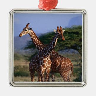 Reticulated Giraffe 2 Silver-Colored Square Decoration
