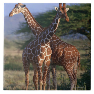 Reticulated Giraffe 2 Tile