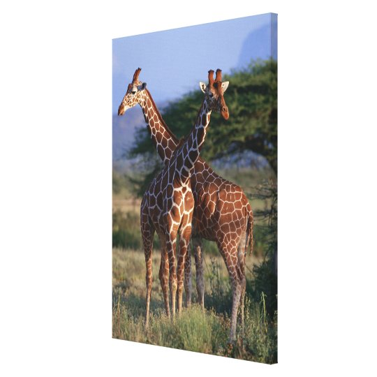 Reticulated Giraffe 4 Canvas Print