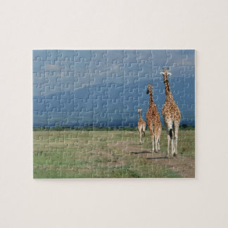 Reticulated Giraffe (Giraffa camelopardalis) 2 Jigsaw Puzzle