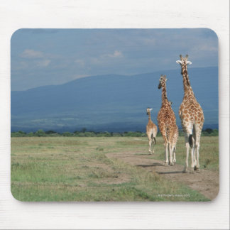 Reticulated Giraffe (Giraffa camelopardalis) 2 Mouse Mat