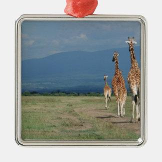 Reticulated Giraffe (Giraffa camelopardalis) 2 Silver-Colored Square Decoration