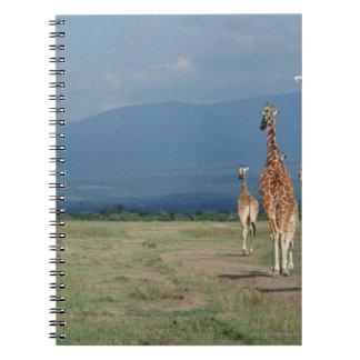 Reticulated Giraffe (Giraffa camelopardalis) 2 Spiral Notebook