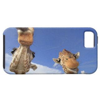 Reticulated Giraffe (Giraffa camelopardalis) 3 Tough iPhone 5 Case