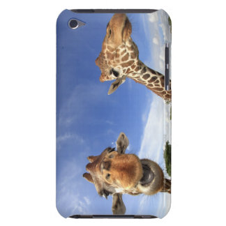 Reticulated Giraffe (Giraffa camelopardalis) iPod Case-Mate Cases