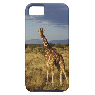 Reticulated Giraffe, Giraffe camelopardalis 2 Case For The iPhone 5