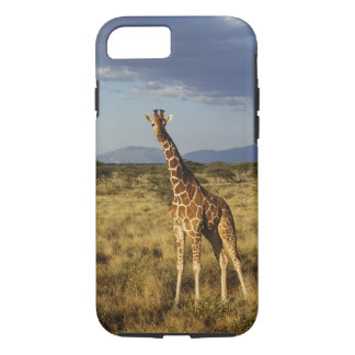 Reticulated Giraffe, Giraffe camelopardalis 2 iPhone 8/7 Case