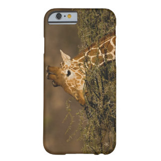 Reticulated Giraffe, Giraffe camelopardalis Barely There iPhone 6 Case