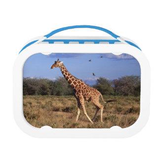 Reticulated Giraffe Lunch Box