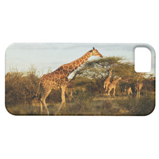 Reticulated Giraffes, Giraffe camelopardalis 2 Barely There iPhone 5 Case