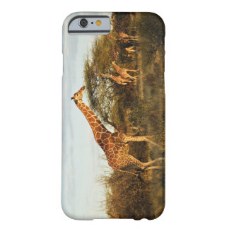 Reticulated Giraffes, Giraffe camelopardalis 2 Barely There iPhone 6 Case
