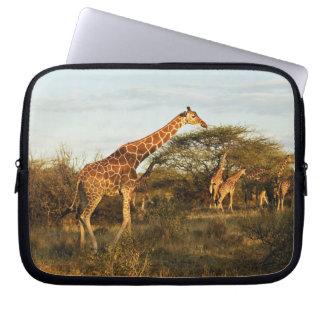Reticulated Giraffes, Giraffe camelopardalis 2 Laptop Sleeve