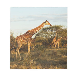 Reticulated Giraffes, Giraffe camelopardalis 2 Notepad