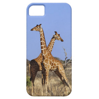 Reticulated Giraffes, Giraffe camelopardalis 3 Barely There iPhone 5 Case