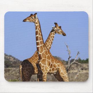 Reticulated Giraffes, Giraffe camelopardalis 3 Mouse Mat