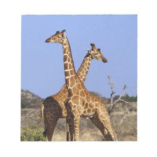 Reticulated Giraffes, Giraffe camelopardalis 3 Notepad