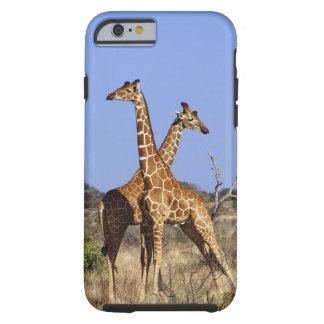 Reticulated Giraffes, Giraffe camelopardalis 3 Tough iPhone 6 Case