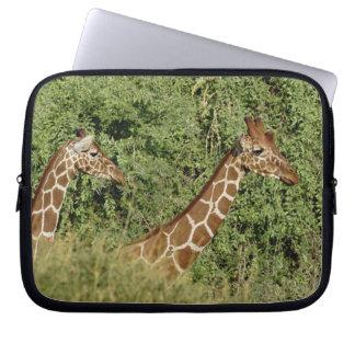 Reticulated Giraffes, Giraffe camelopardalis Laptop Sleeve