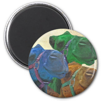 retro camels 6 cm round magnet
