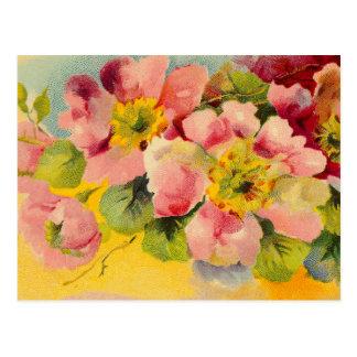 Retro Chic Elegant Pink Vintage Floral Primroses Post Cards
