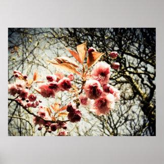 Retro effect cherry tree blossom poster