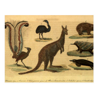 Retro Oceania animals Postcard