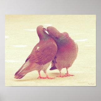 Retro Pigeon Love Birds Kissing Couple Photo Poster