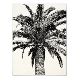 Retro Tropical Island Palm Tree in Black and White Art Photo