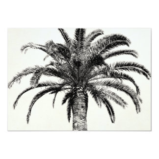 Retro Tropical Island Palm Tree in Black and White Card