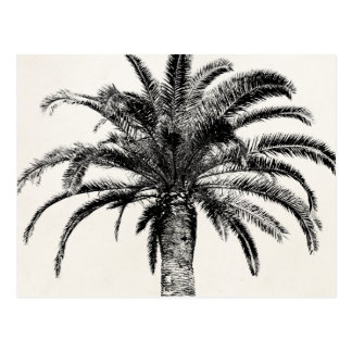 Retro Tropical Island Palm Tree in Black and White Post Card