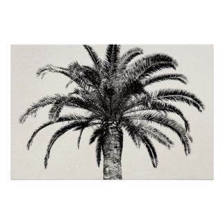 Retro Tropical Island Palm Tree in Black and White Print