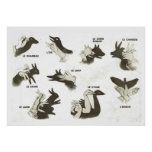 Retro vintage French shapes for shadow puppets Poster