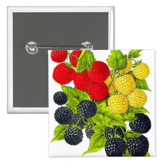 Retro Vintage Fruit Berries Blackberries Varieties 15 Cm Square Badge