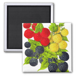 Retro Vintage Fruit Berries Blackberries Varieties Magnets