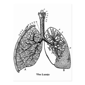 Retro Vintage Kitsch Anatomy Medical Lungs Postcard