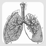 Retro Vintage Kitsch Anatomy Medical Lungs Square Sticker