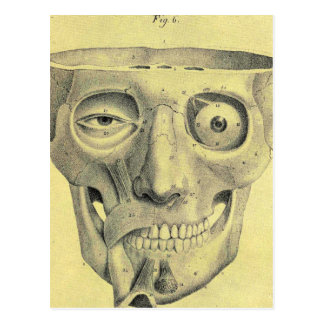 Retro Vintage Kitsch Medieval Skull Illustration Postcard