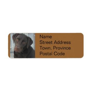 Return Address Labels - Chocolate Lab