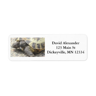 Return Mailing Address Labels with Cute Turtle
