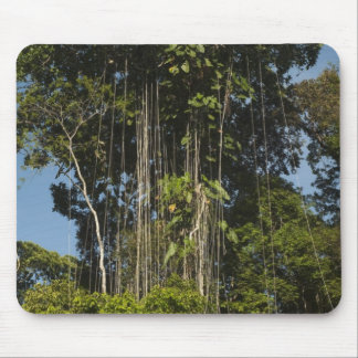 Rewa River edge Rainforest Guyana Mouse Pad