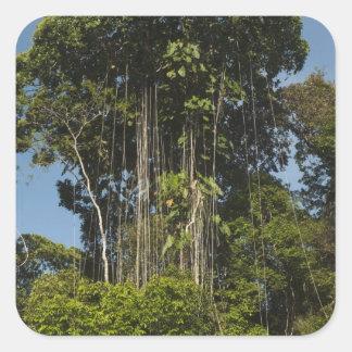 Rewa River edge Rainforest Guyana Square Sticker