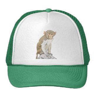 Rhesus Macaque Mesh Hats