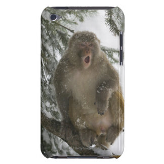 Rhesus Macaque monkey (Macaca mula) sitting iPod Case-Mate Case