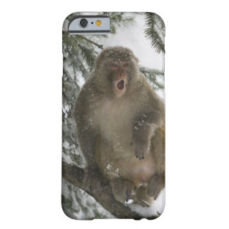 Rhesus Macaque monkey (Macaca mulatta) sitting Barely There iPhone 6 Case