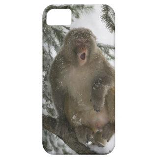 Rhesus Macaque monkey (Macaca mulatta) sitting Barely There iPhone 5 Case
