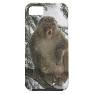 Rhesus Macaque monkey (Macaca mulatta) sitting iPhone 5 Cases