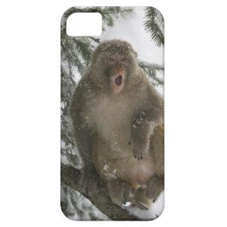 Rhesus Macaque monkey (Macaca mulatta) sitting iPhone 5 Covers