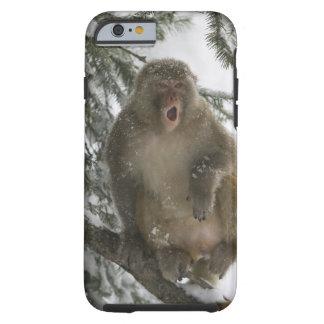Rhesus Macaque monkey (Macaca mulatta) sitting Tough iPhone 6 Case