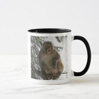 Rhesus Macaque monkey (Macaca mulatta) sitting Mug