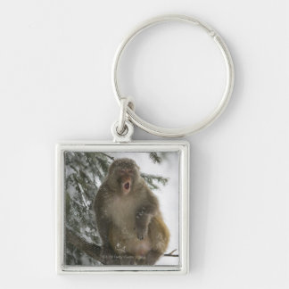 Rhesus Macaque monkey (Macaca mulatta) sitting Silver-Colored Square Key Ring